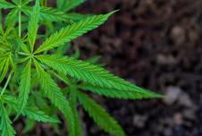 Can Marijuana Help My Teen Manage Anxiety?