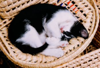 How Resting More Can Boost Your Productivity
