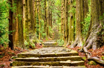 Why Forest Bathing Is Good for Your Health
