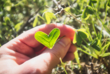 Can Gratitude Help You Live More Sustainably?