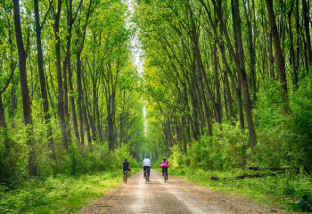 How Nature Helps Us Heal