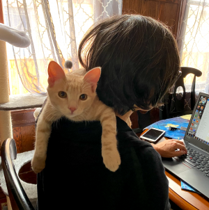 Michelle working from home with the help of her new kitten.