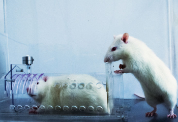 What Helpful Rats Can Teach Us About Humanity