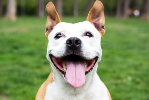 The Science-Backed Benefits of Being a Dog Owner