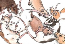 Do Rats Feel Empathy?
