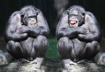 What Kind of Emotions Do Animals Feel?