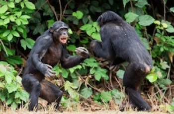 What Bonobos Can Tell Us About Our Parents