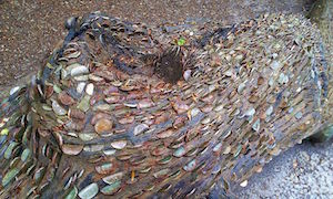 A coin tree