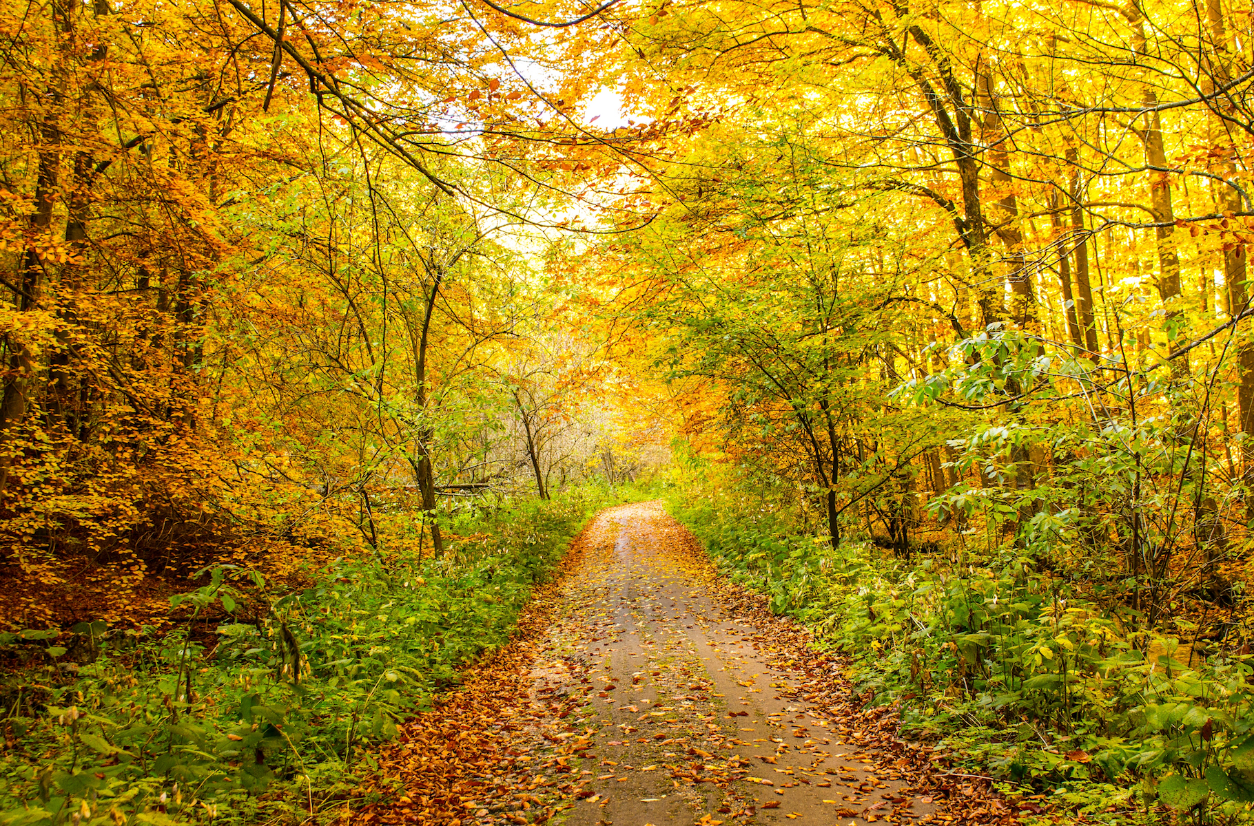Is Living Near a Forest Good for Your Brain?