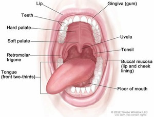 The human oral cavity: sexy?